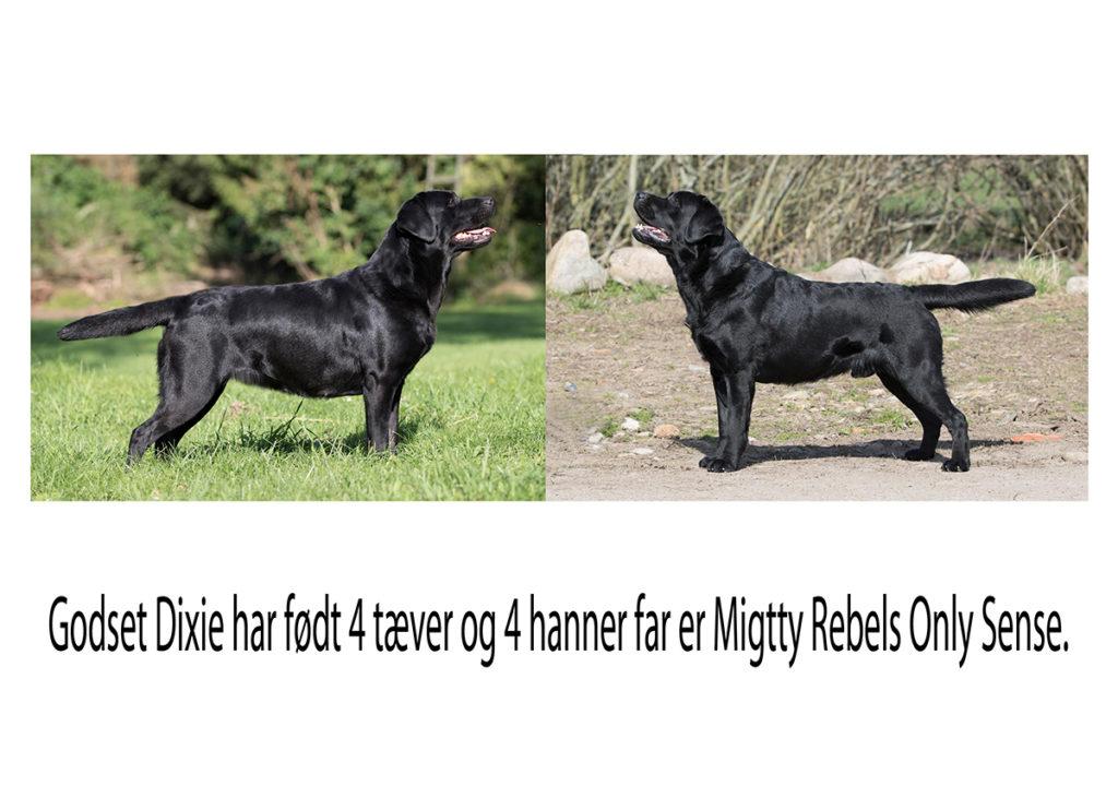 Godset Dixie har født hvalpe,  4 tæver og 4 hanner